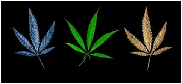 A CANNABIS BRAND'S PUBLIC RELATIONS AND MARKETING PLAN