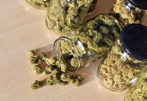 The 4 Best Long-Term Cannabis Storage Solutions—Ranked!